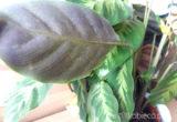 Przędziorki - maleńkie szkodniki twoich roślin doniczkowych. Poznaj sposoby na ich zwalczenie