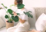 Monstera w domu nie tylko w doniczce. Motywy roślinne w domu